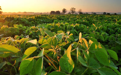 Soybean Planting and Why the Date Matters