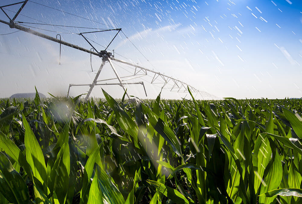 Corn Irrigation, Water Preservation, and Water Stress