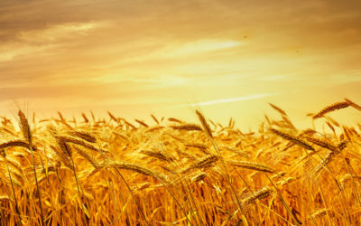 How to Store Freshly Harvested Grain